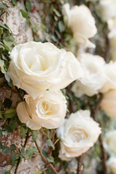 Large white garden roses