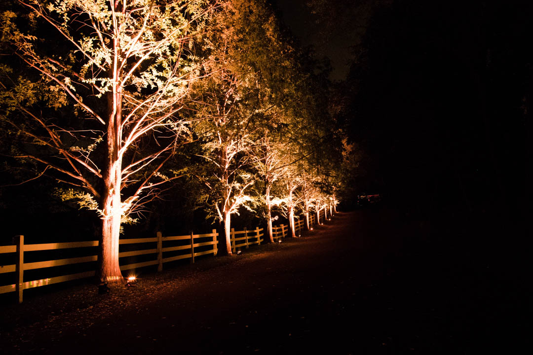 tree lined driveway with amber uplighting