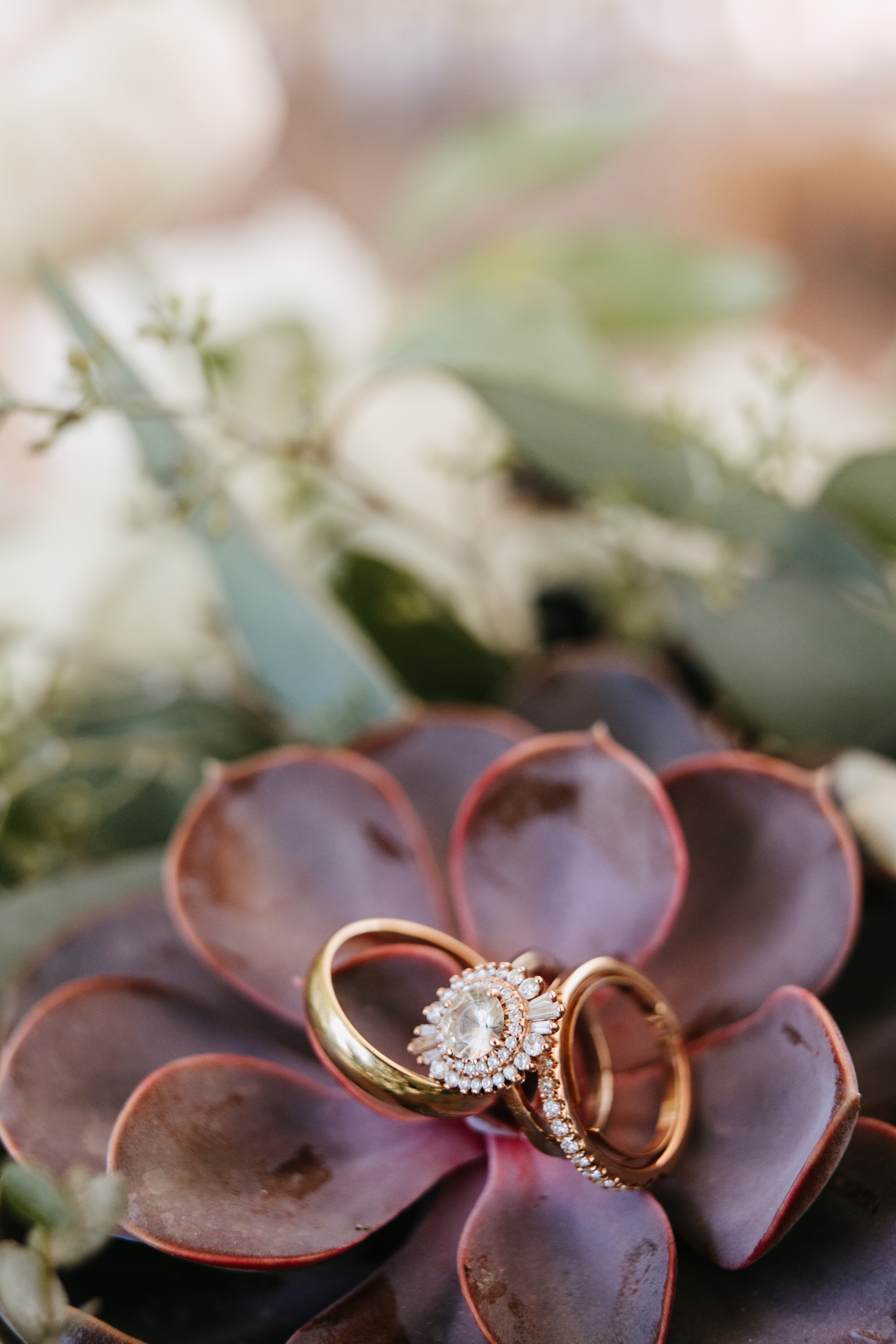 wedding bands on succulent